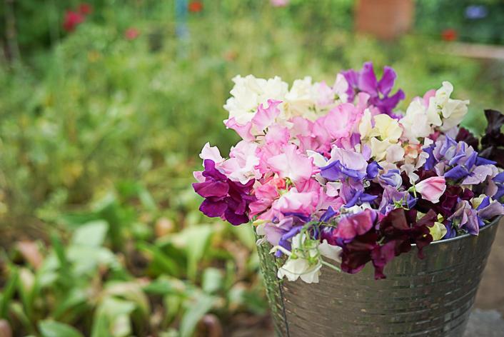 ¿Sabías que las flores cada vez huelen menos?